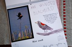 """a calendar of birds - """"Each month's page features a photograph by Steve or I, drawings of the birds, lettering of the birds, and little commentary by the babes...We printed these on the over-sized (13 X 19"""") premium calendars - the size is perfect for this kind of project."""""""