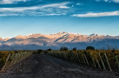 Sunset at the Vines of Mendoza