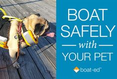 Kayak Fishing Mods Tips for safely taking Rover on the boat -- whether for an afternoon or a lifetime! Dog Friends, Friends In Love, Dogs On Boats, Living On A Boat, Boat Safety, Dog Insurance, Love Boat, Pet Travel, Kayak Fishing