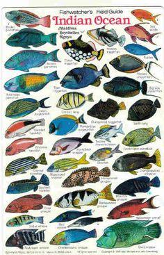 seychelles reef fish - Google zoeken
