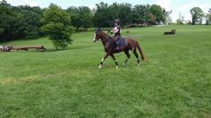 Horse jump overkill to clear small piece of wood   funny pictures