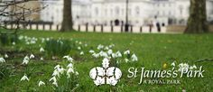 Have a picnic in Saint James Park.  Watch the ducks, play at the playground and walk over to the Palace.  Make the picnic even easier by picking up sandwiches at Inn the Park. (lw 2-2)