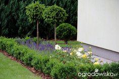 Ogród Tosi - strona 35 - Forum ogrodnicze - Ogrodowisko