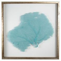 "Featuring a delicate sea fan against a solid backdrop, this framed wall decor brings a coastal-chic touch to your breakfast nook or den.     Product: Wall decorConstruction Material: Wood, glass and seafanColor: Distressed silver frameFeatures: Floating seafanDimensions: 23.25"" H x 23.25"" WNote: Hanging hardware includedCleaning and Care: Wipe with cloth"