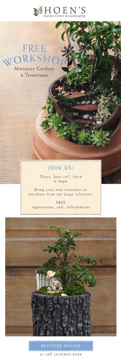 Create your miniature garden for the summer