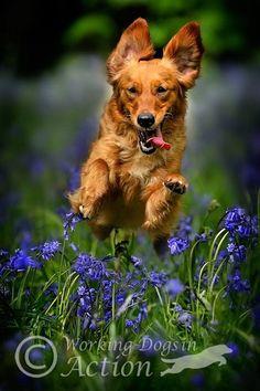 Empezamos el lunes con ganas :) #perro #dog #animals