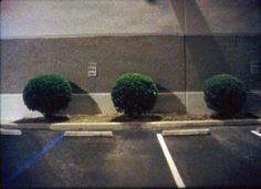 Deborah Stratman, In Order Not To Be Here Underground Film, Video Film, Film Stills, Beautiful, Tv, Plants, Thinking About You, Television Set, Plant