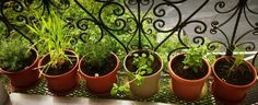 Grow your Own Potted Herb Garden and Reap the Health Benefits