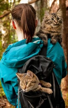 'Adventure Cats' make purr-fect travel companions:  Bolt and Keel, rescued as kittens, now go on all kinds of outdoor adventures (CBC News 13 April 2016)