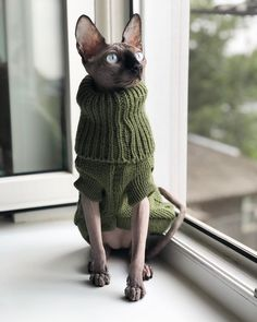 sphynx cat Are Sphynx Cats So Scary 15 Facts Refute This Opinion Gato Sphinx, Cute Hairless Cat, Baby Animals, Cute Animals, Baby Giraffes, Cat Sweaters, Beautiful Cats, Cat Breeds, Crazy Cats