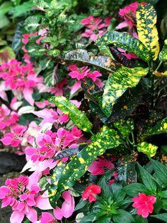 Local Parks, Plants, Plant, Planets