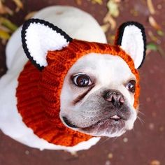 """- Orange """"Fox"""" dog snood with large black & white ears - 100% acrylic yarn - Available in small, medium, and large sizes - Pictured: medium size on a 30 lbs corgi, 16"""" head Show your pooch how much yo"""