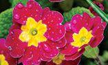 Alabama Gardener   A State-by-State Gardening Publication