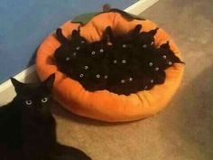 Black cat with her kittens in Halloween orange cat bed.