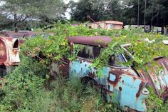 1955 Chevrolet Nomad: Overgrown Wagon - http://barnfinds.com/1955-chevrolet-nomad-overgrown-wagon/