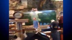 Teen Hits Head Jumping Into Bass Pro Aquarium