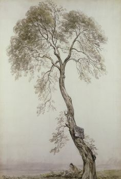 """1835 ~ """"An Ash Tree"""" . Watercolour & Pencil by John Constable English Romantic Painter . Landscape Drawings, Landscape Art, Landscape Paintings, Art Drawings, English Romantic, Ash Tree, Tree Sketches, Gravure, Painting & Drawing"""