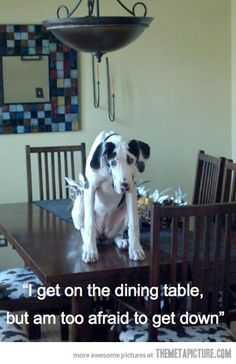 First World Dog Problem…sounds like luke when he get in the kitchen chair.