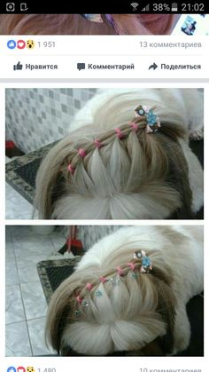 This is what my future dog will wear to my wedding. what a gorgeous accessory! Dog Grooming Styles, Dog Grooming Shop, Dog Grooming Salons, Shih Tzus, Shih Tzu Dog, Shih Tzu Hair Styles, Maltese Haircut, Creative Grooming, Puppy Cut