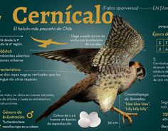 Pet Birds, Animals And Pets, Medical Mnemonics, Infographics, Behance, Yard, Drawings, The World, Animal Science