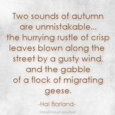 Two sounds of autumn are unmistakable.the hurrying rustle of crisp leaves blown along the street by a gusty wind, and the gabble of a flock of migrating geese. Autumn Day, Autumn Leaves, Soft Autumn, Autumn Harvest, Jean Giono, Lovely Smile, Happy Fall, Hush Hush, Fall Season