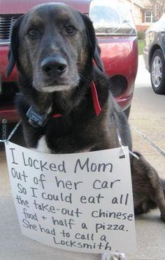 Hilarious dog shaming sign via www.bored.com