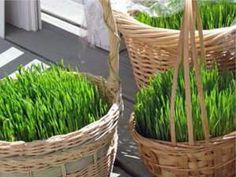 Grow a Real Grass Easter Basket (So Easy)! The ultimate . Grow grass instead of using environmentally unfriendly plastic or paper! You can put your candy or treats right onto this grassy lawn in your child's basket :) Grass Seed, Wheat Grass, Grass Centerpiece, Centerpieces, Growing Grass, Easter Celebration, Easter Crafts, Easter Ideas, Easter Recipes