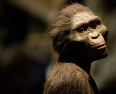 Our closest known relative 3.3 million years ago was a half-human, half-ape species that could both walk on the ground and swing through the trees, suggests a new study co-authored by the Academy's Curator of Anthropology, Zeray Alemseged.