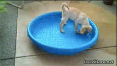 Este perro que se pasó en la fiesta de piscina… | 27 perros que fallaron tan rotundamente, que no puedes contener la risa