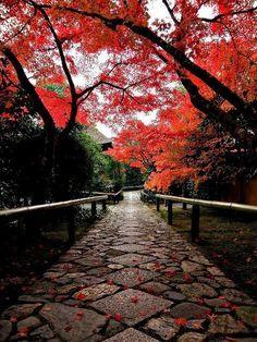 Autumn walks #autumn #fall