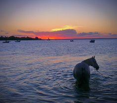 Mozambique Horse Safari - The Bazaruto Archipelago Vilanculos Mozambique