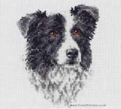 Border Collie - Dog Cross Stitch Kit from Anchor
