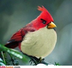 The original angry bird?