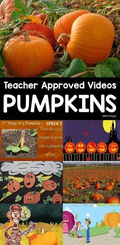 Pumpkin Videos - Simply Kinder Here is a teacher approved list of pumpkin videos for you and your classrooms. This list includes videos that. Fall Preschool, Kindergarten Science, Preschool Activities, Language Activities, Teaching Science, Kindergarten Classroom, Holiday Activities, Halloween Activities, Preschool Halloween