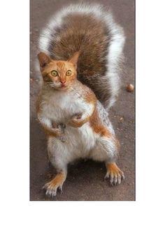 Could A Squirrel Morph Into A Cat? ... #pets #animals ... PetsLady.com | via @roncallari