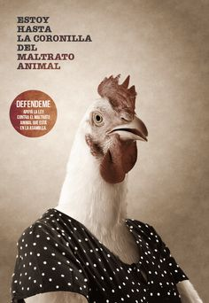 Animal Protection Act by Daniel Montiel, via Behance
