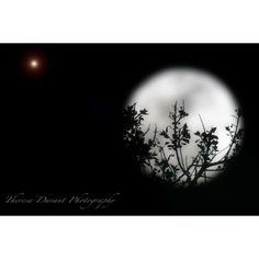 Holding the Moon- black and white photography- wall art- artistic... ($20) ❤ liked on Polyvore featuring home, home decor, wall art, photography wall art, star home decor, tree wall art, photographic wall art and star wall art
