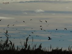 Herons and Cormorants...