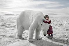 View top-quality stock photos of The Polar Bear Hug. Find premium, high-resolution stock photography at Getty Images. Boxed Christmas Cards, Christmas Wishes, Christmas Holiday, Holiday Cards, Art D'ours, Baby Animals, Cute Animals, Polar Animals, Kunst Online