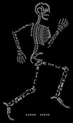 Els noms dels ossos.