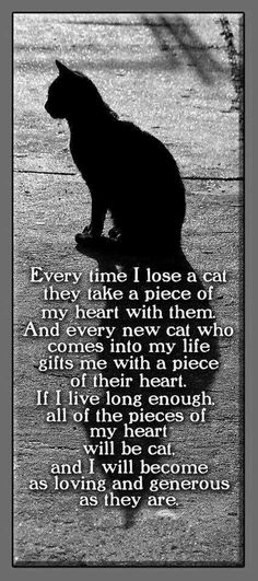 Every time I lose a cat . . .----so many over the years, :(  .....have always had cats...  really like this