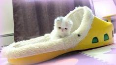 via MSN, this is Marshmallow...oooooohhhh mg