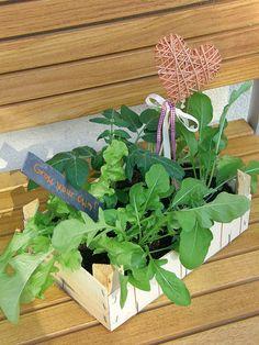 Gartenzauber | Mini-Gemüsebeet zum Verschenken | DIY gift