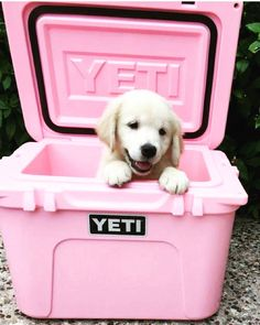 the puppy is super cute... but where can i find the pink yeti??