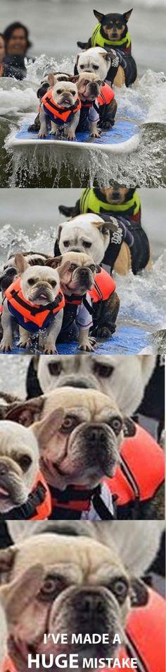 Surfing dog has second thoughts... Hahahahahahaha...