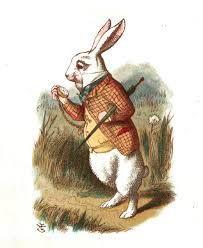 white rabbit tea shop