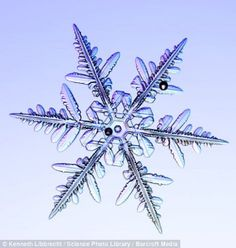This reminds me of. My cousin Kim loves her snow flakes
