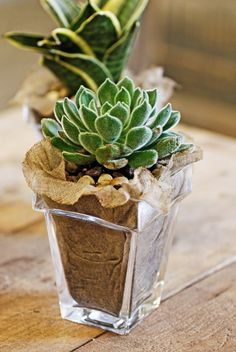 I would like this in my house, burlaped succulent