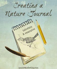 Diy Nature, Nature Study, Science And Nature, Nature Crafts, Garden Journal, Nature Journal, Journal Pages, Journal Art, Bullet Journal