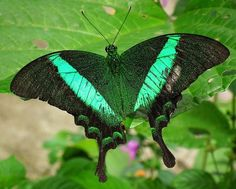 A linda borboleta-esmeralda                                                                                                                                                                                 Mais